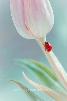 composition with flowers, plansts,bugs,animals,birds She's A Lady, Lady In Red, Beautiful Creatures, Animals Beautiful, Cool Insects, Fotografia Macro, Beautiful Bugs, Mother Nature, Photos