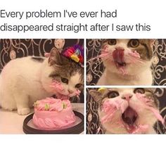 CAT HAS DISCOVERED CAKE. CAT MUST HAVE MORE.