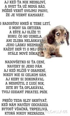 Je to veľmi pekne English Words, True Words, Motto, Quotations, Poems, Quotes, Animals, Qoutes, Qoutes