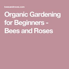 Organic Gardening for Beginners - Bees and Roses