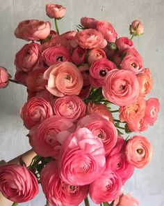 Ranunculus 'Salmon Elegance' - Buds and Blossoms - Flowers My Flower, Fresh Flowers, Spring Flowers, Cut Flowers, Beautiful Flowers, Cactus Flower, Exotic Flowers, Purple Flowers, Roses Pink