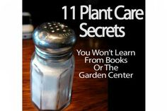 11 Secrets You Won't Learn From Books Or The Garden Center