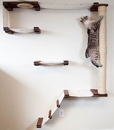 CatastrophiCreations Cat Mod Climb Track - Multiple-level Cat Hammock and Climbing Activity Center - Handcrafted Wall-mounted Cat Tree Shelves -- For more information, visit image link. (This is an affiliate link and I receive a commission for the sales) Tree Shelf, Cat Activity, Cat Perch, Cat Playground, Playground Design, Cat Climbing, Cat Scratcher, Cat Room, Cat Wall