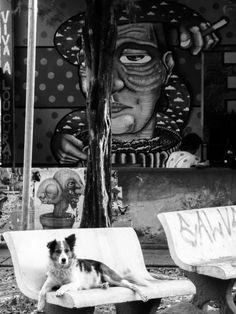 Viva a Loucura, Cidade Constante, 2015 David Richard