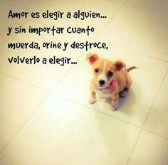 """AMOR es... """