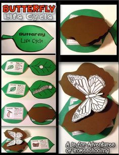 Butterfly life cycle craft - Life Shirts - Ideas of Life Shirts - Butterfly Life Cycle Activities! First Grade Science, Kindergarten Science, Science Classroom, Teaching Science, Science Activities, Elementary Science, Preschool, Butterfly Project, Butterfly Crafts