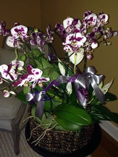 Speckled orchids