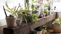Guide to Houseplants
