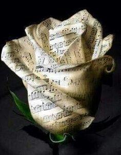 Des fleurs en musique ou de la musique en fleurs !!!