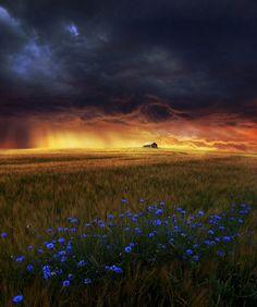 dream field by Barbara Florczyk, via 500px