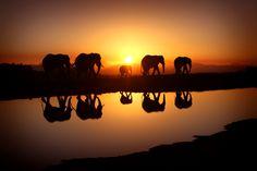 Elephant Art High Definition Wallpaper HD Wallpapers 3888x2592 px 2.38 MB