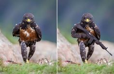 Badass hawk inspires the ultimate Photoshop battle  Bless the internet. http://www.thesouthafrican.com/badass-hawk-inspires-the-ultimate-photoshop-battle-photos/