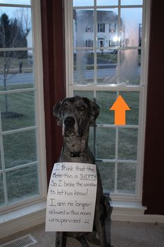 """Our Great Dane Eli has issues with the Meter Man because he comes so close to the house. He jumped up on the window and broke it! His sign says, """"I think the Meter Man is SHIFTY! so I broke the win..."""
