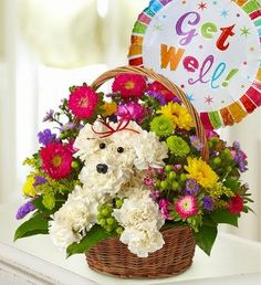 1-800-Flowers - a-DOG-able in a Basket - with Get Well Balloon By 1800Flowers - http://yourflowers.us/1-800-flowers-a-dog-able-in-a-basket-with-get-well-balloon-by-1800flowers/