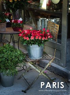 paris roses, via Flickr.