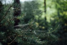 Northern Woods - Searching For Tomorrow - A Photographic Diary by Kitty and Nathan Mistletoe And Wine, Mystical Forest, Sleeping Under The Stars, Woodland Creatures, Green Trees, Shades Of Green, The Great Outdoors, Nature Photography, Waterfall