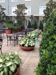 Greenery on the courtyard of the Omni Royal Orleans Hotel #NOLA #weddings
