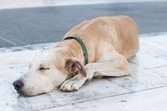 Riot Dog | Loukanikos @ Greece