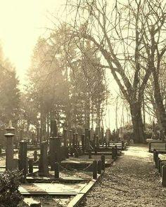 Begraafplaats Dalweg Wildervank. Foto © Margriet van Oostrum