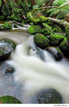Rain forest Tasmania Australia by john white photos, via Flickr #AustraliaItsBig