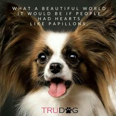 Papillon Quote from TruDog!