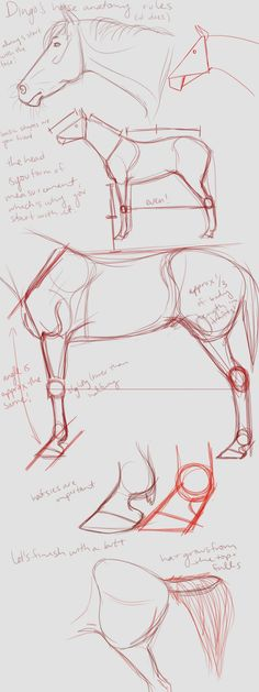 dingo's horse anatomy rules (it does) by DingoMutt on - Pferd Horse Drawings, Art Drawings Sketches, Animal Drawings, Drawing Art, Anatomy Sketches, Anatomy Drawing, Anatomy Art, Horse Drawing Tutorial, Arte Equina