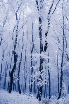 The cold snowflakes may fall... But with our warm hearts we can't fail.