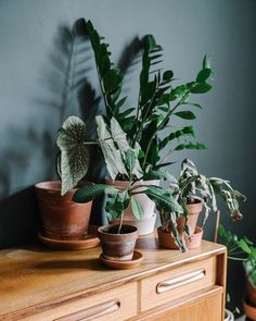 Plant watering day has  come back around 🌿 💦 Desperately trying to bring my Easter cactus back from a near death experience, think we're nearly there ! Also does anyone know why the terracotta pots go white ? Im using rain water not tap?! . . 📷- @emrometcalfephoto . . #crazyplantlady #bohohomedecor #greenupyourgaff #farrowandball #victorianhouse #renovation #plants #plantsofinstagram #therealhouseplantsofinstagram #plantparenthood #houseplants #plante #houseplantdiary #houseplantcommunity…