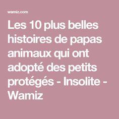 Les 10 plus belles histoires de papas animaux qui ont adopté des petits protégés - Insolite - Wamiz