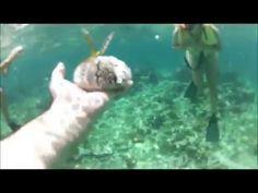 Negril   Snorkeling1