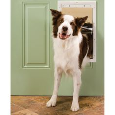PetSafe Plastic Pet Door, Large - Tractor Supply Online Store