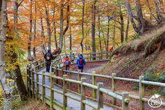Siguiendo el trazado del antiguo tren minero de Teverga y Quirós se pueden recorrer algunos de los más impresionantes parajes de la naturaleza asturiana. Esta Vía Verde se interna en los astures Valles del Oso y va ascendiendo entre el corazón de la montaña asturiana mostrándonos unos paisajes de ensueño.. photo by: Senda del Oso https://www.flickr.com/photos/sendadelosoinfo/11149211915