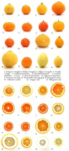 list of citrus fruits healthy facts about fruits