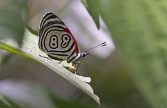 Lijstje van de week: 9x meest bijzondere vlinders #vlinder #vlinders #lijstje
