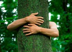 Jako každý organismus, mají i stromy svoji energii. Mohou nám pomáhat energii doplňovat, vrací nám harmonii, rovnováhu,…