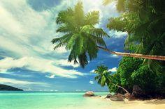 Wallpaper Seychelles Paradis In Oceanul Indian Travel Wallpaper, Photo Wallpaper, Nature Wallpaper, Hd Wallpaper, Seychelles, Palm Trees Beach, Tree Wall Decor, Wallpaper Online, Original Wallpaper