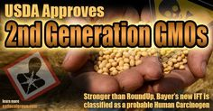 WHAT THE FUCK!!!! The USDA has just approved a new generation of GMOs for use with more deadly herbicides than the toxic glyphosate that currently taints farms across America- Bayer has developed a soybean that can withstand applications of the toxinisoxaflutole (IFT)...