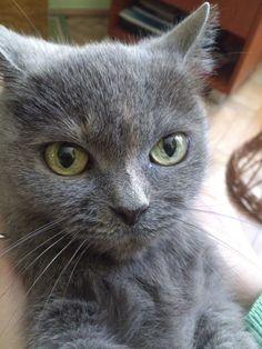 cat ,yellow eyes