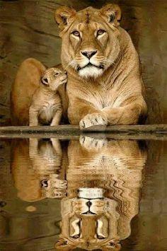 I love you Momma
