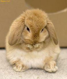 Bunny sweet.