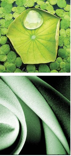 Water-repellant fabric mimics the lotus leaf's microscopic bumps that enable water droplets to roll off.