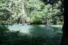 Ohanapecosh -Washington State