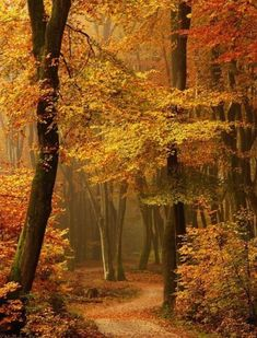 52 Ideas Photography Autumn Leaves Paths For 2019 Foto Nature, Beautiful Places, Beautiful Pictures, Amazing Places, Beautiful Forest, Beautiful Mind, Autumn Scenes, Fall Pictures, Forest Pictures