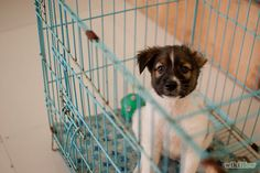 5 Ways to Crate Train Your Dog or Puppy - wikiHow [Oh My Word, why did I never think to spray paint the crate??!!]