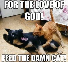 These funny dogs and cats are on a undertaking to make you smile.See more ideas about Funny animals, Dog cat and Cute animals.Read This Top 24 Funny Cats and Dogs Dog Quotes Funny, Funny Animal Memes, Cute Funny Animals, Animal Quotes, Funny Animal Pictures, Dog Pictures, Funny Cute, Funny Dogs, Animal Captions