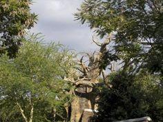 Animal Kingdom - Africa