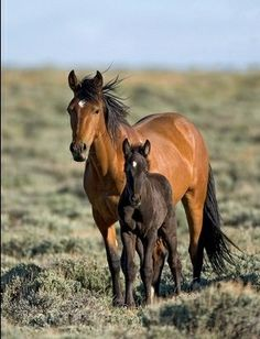 Wild horses - mare and foal Baby Horses, Horses And Dogs, Wild Horses, Animals And Pets, Cute Animals, Horse Photos, Horse Pictures, Most Beautiful Animals, Beautiful Horses
