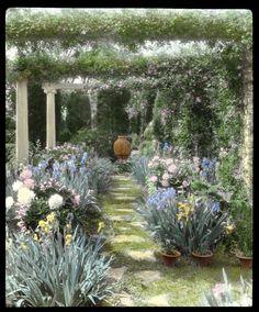 Fredericksburg Virginia, Pulling Weeds, Antebellum Homes, Plantation Homes, Garden Club, Bradford, Garden Landscaping, Pergola, Landscapes