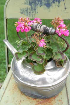 Pink Geraniums in a kettle on an old metal chair.  The Inhales & Exhales of DewKist
