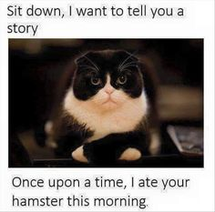 Funny Animal Pictures Of The Day  34 Pics